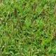 Bluedale Wholesale Nursery - native grass