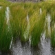 Bluedale wholesale nursery - wetland plants